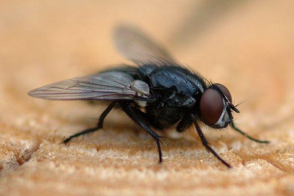 Fliege vor dem Start
