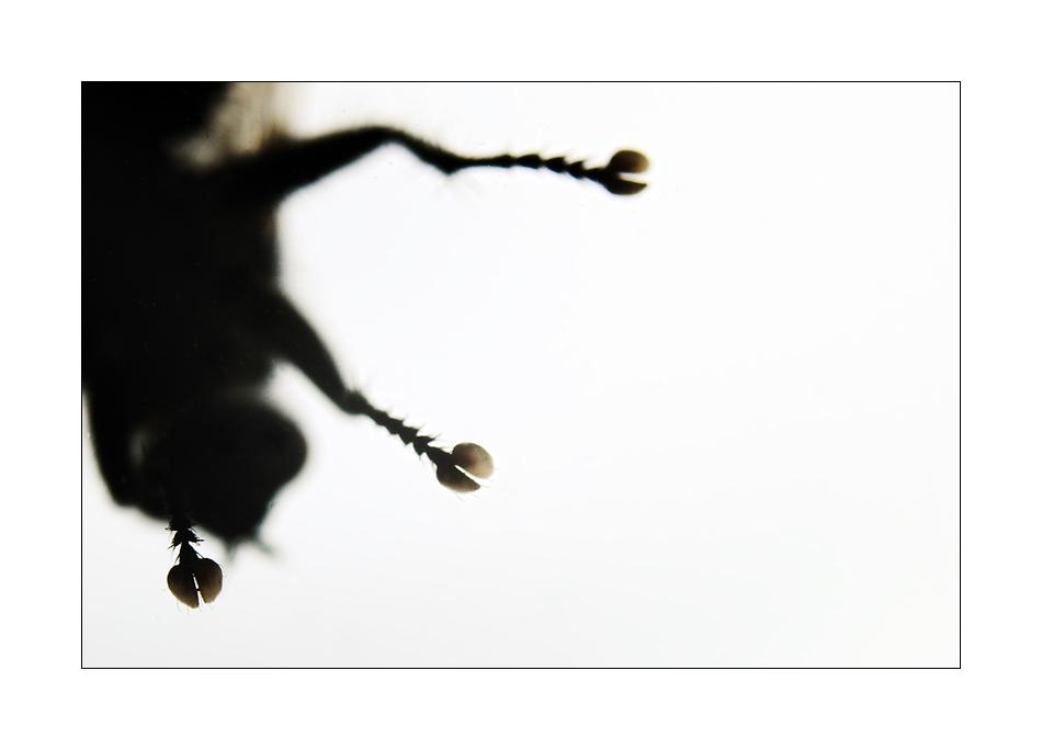 Fliege vorm Fenster