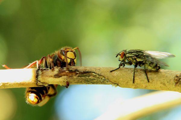 Fliege will Naschen