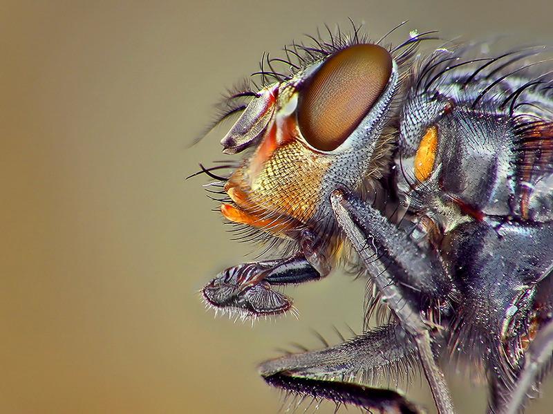 Fliege - zur näheren Betrachtung .......