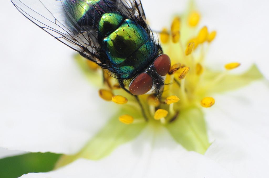 Fliege2