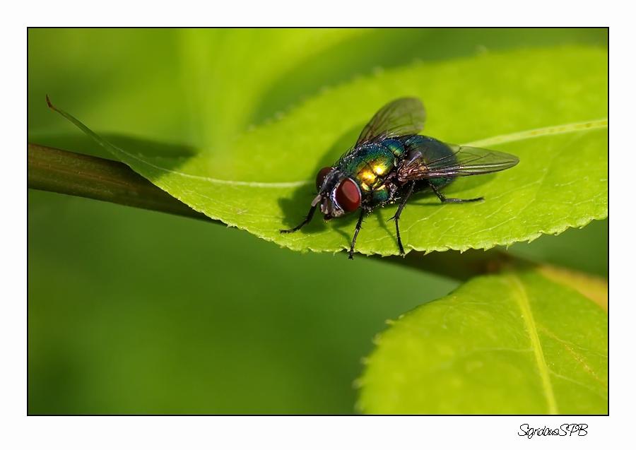 Fliege...ein schöner Platz im Grünen :-)
