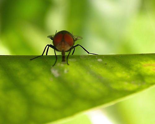 Fliegefrontal