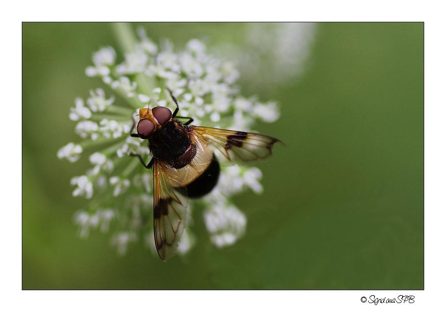 Fliege...mal aus einer anderen Perspektive