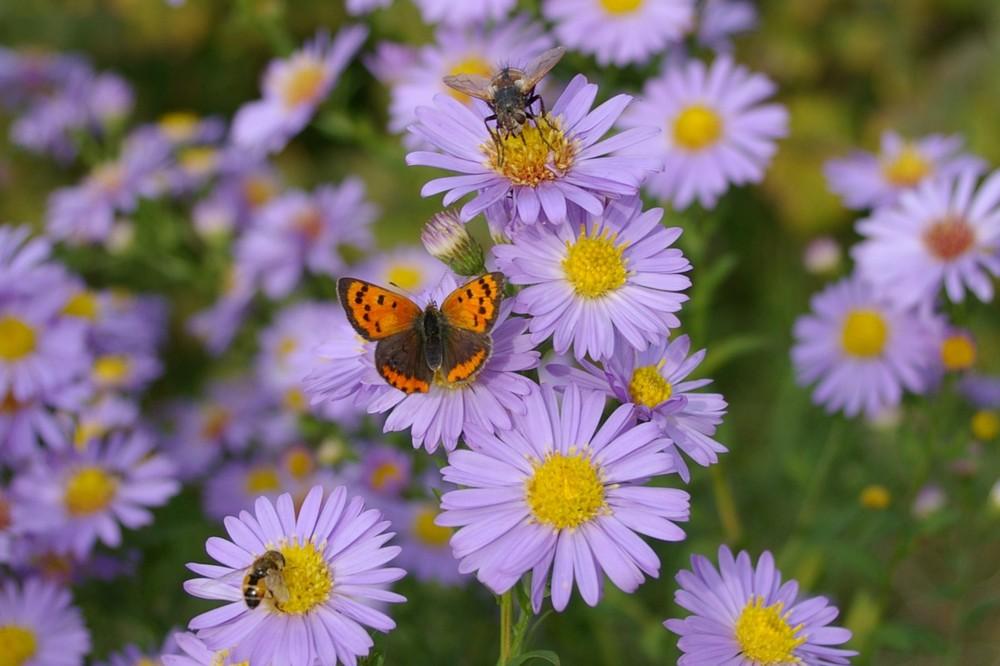 Fliegen, Bienen Schmetterlinge