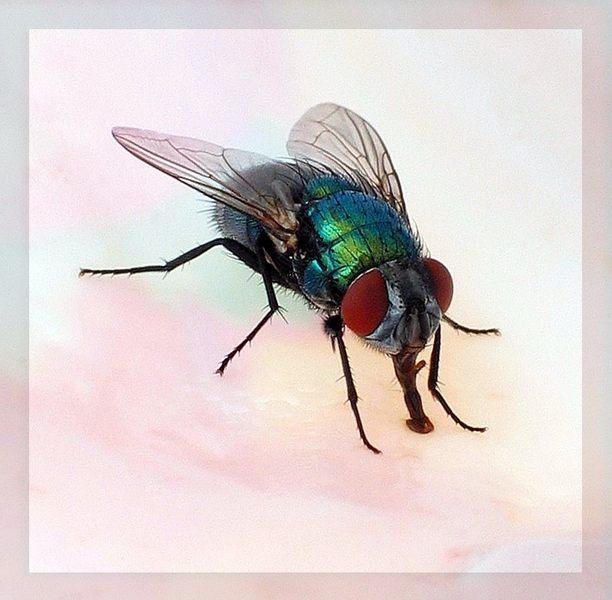 Fliegen können doch schöne Tiere sein !?!?