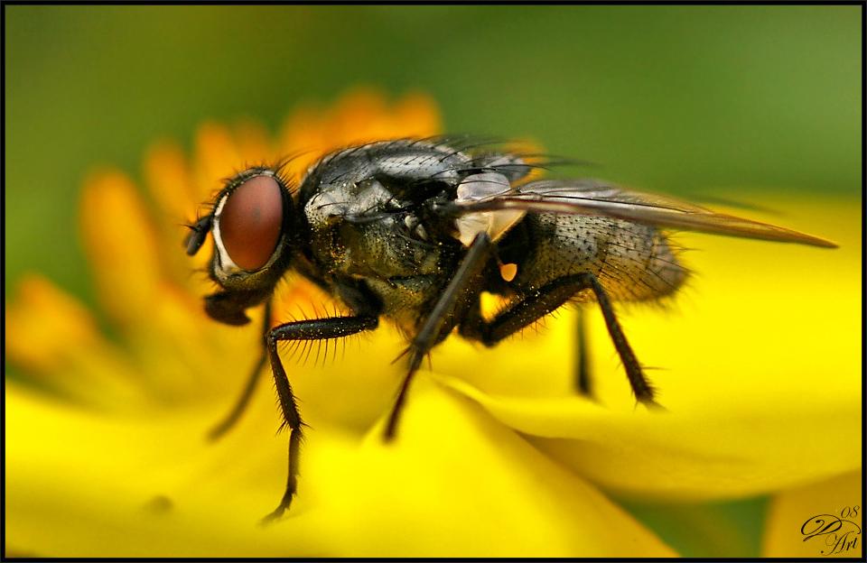 Fliegen-Makro