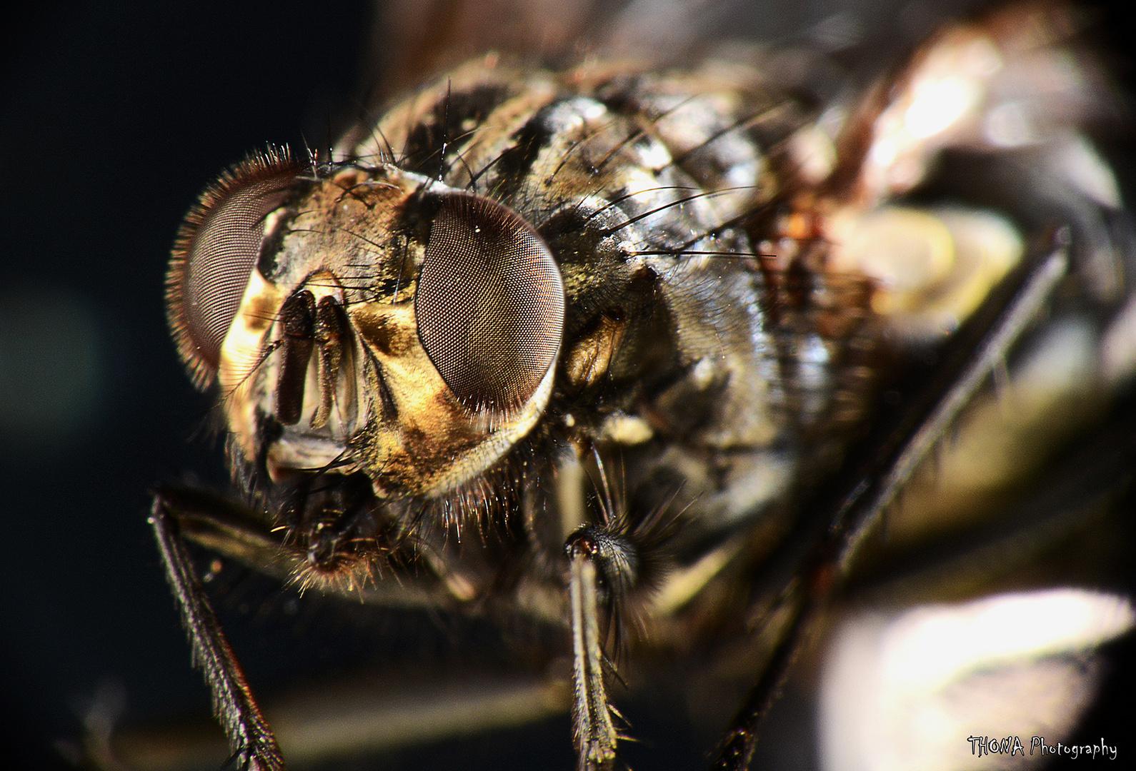 Fliegen Makro
