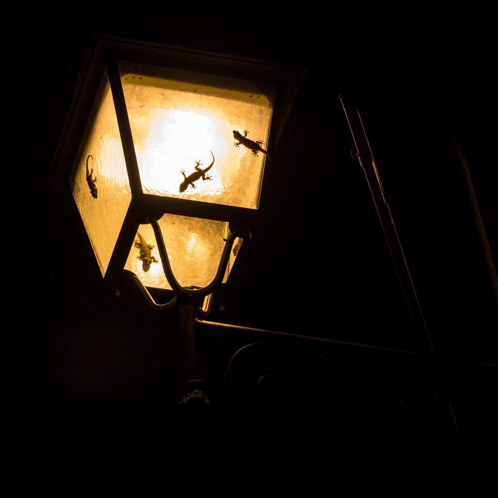 fliegen Motten in das Licht...