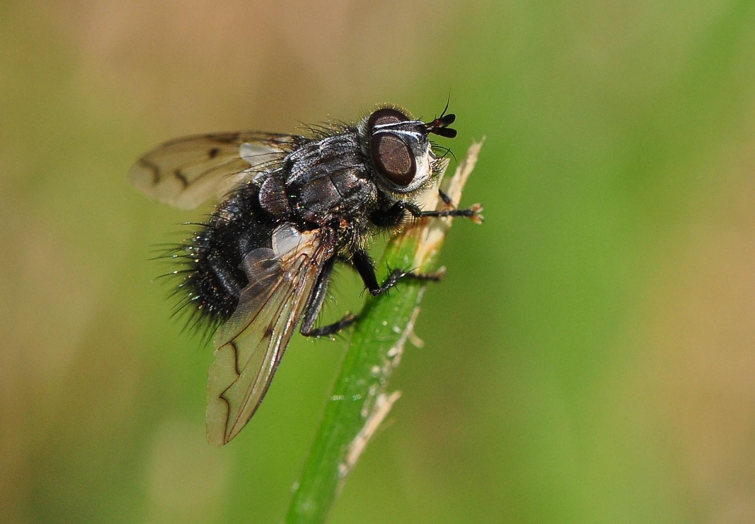 Fliegen & Mücken .....