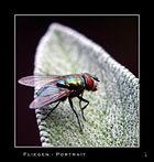 Fliegen - Portrait