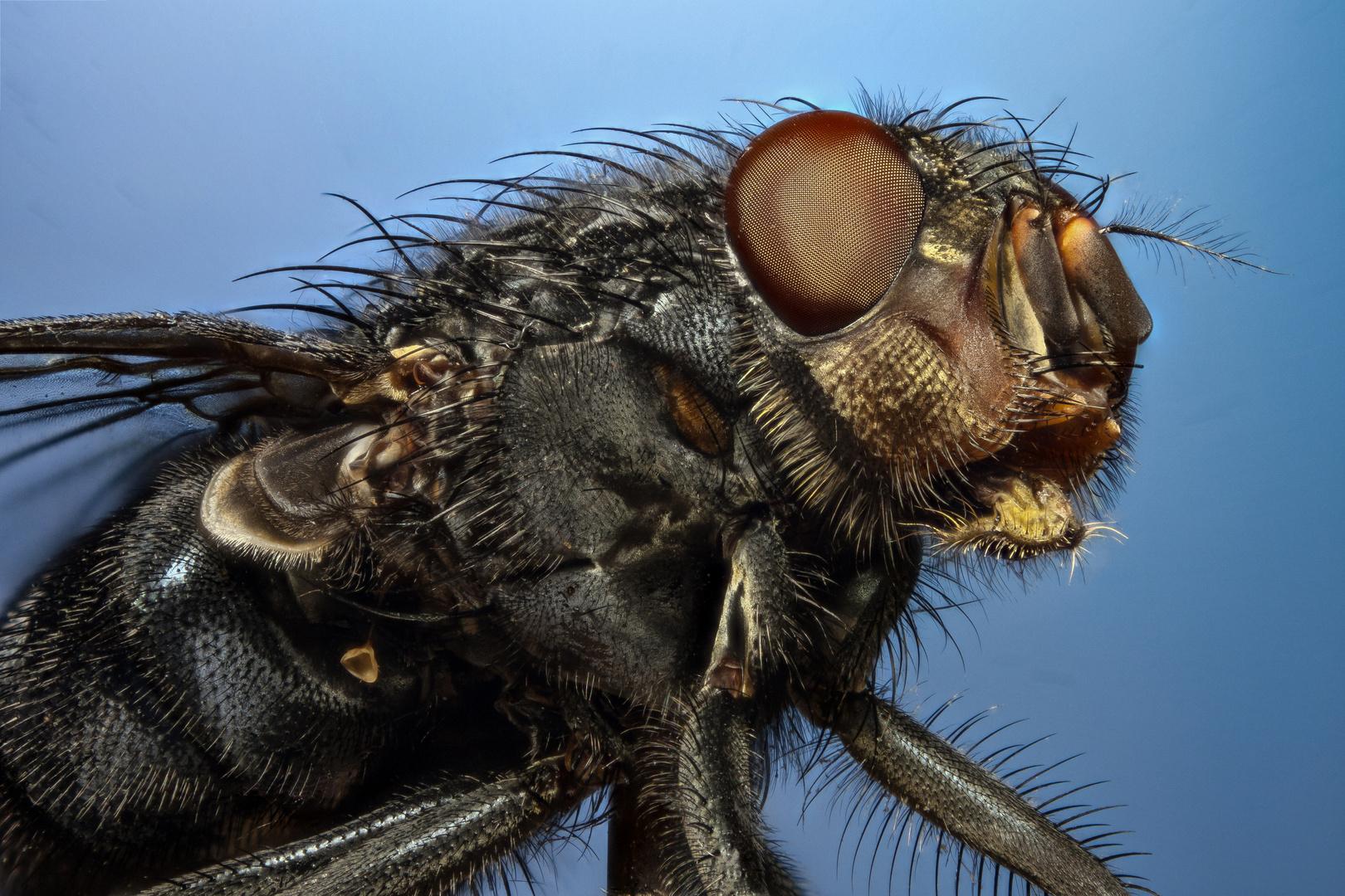 Fliegen Stack
