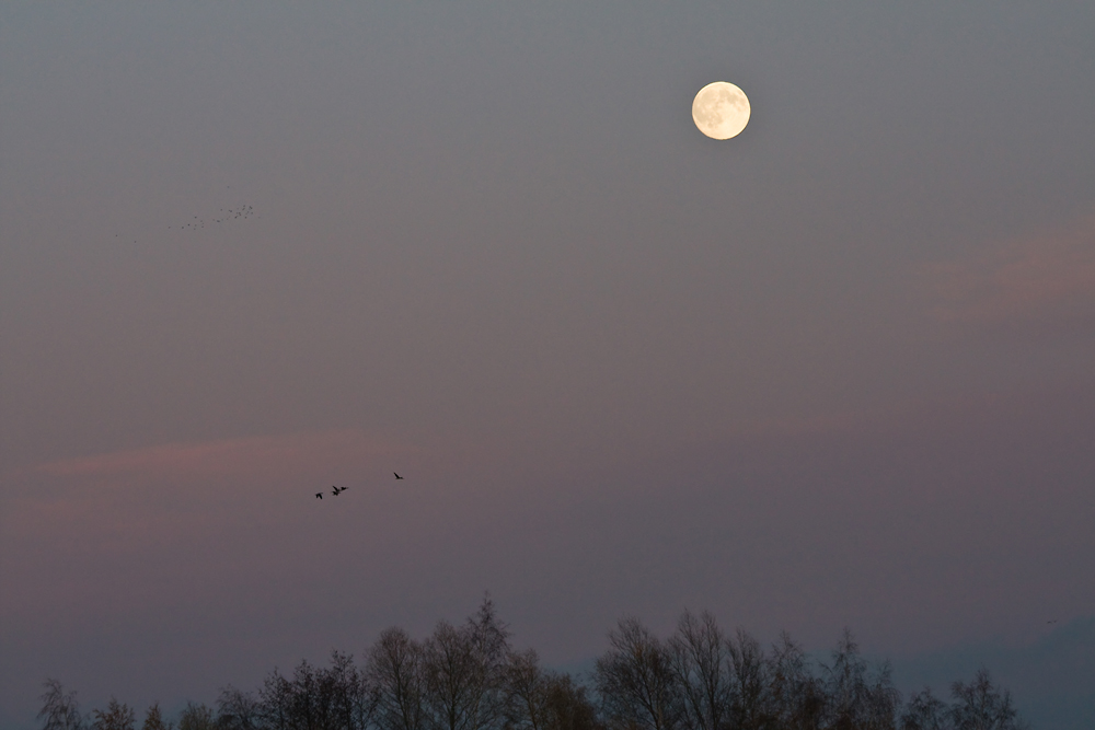 Fliegen zum Mond?