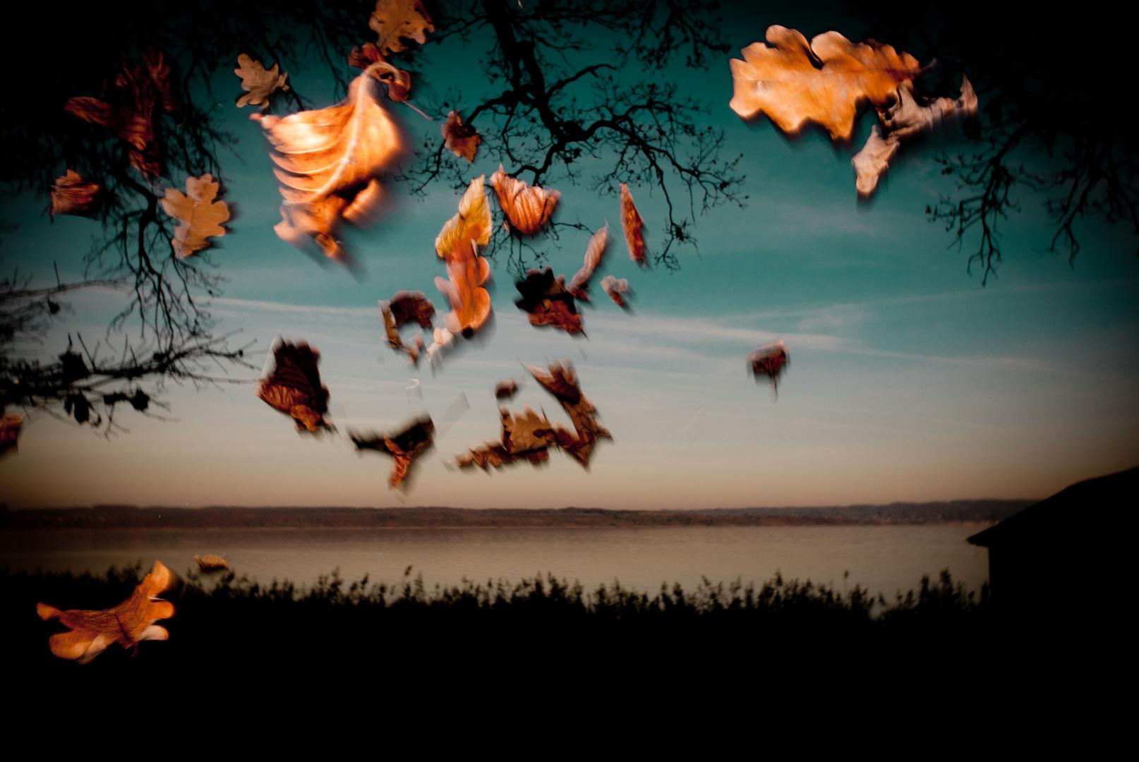 Fliegende Blätter