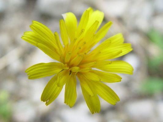 Fliegende Blüte