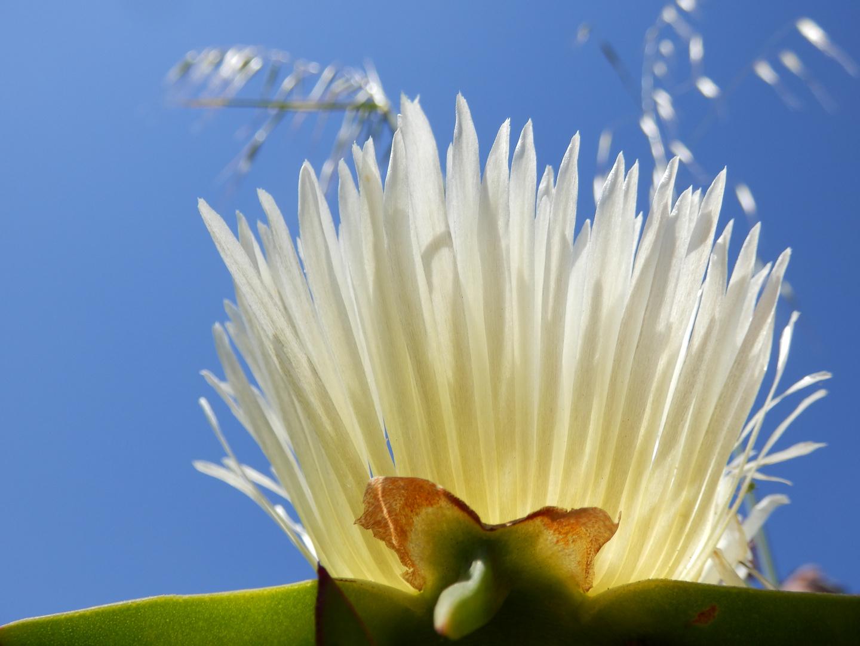 Fliegende Blütenblätter