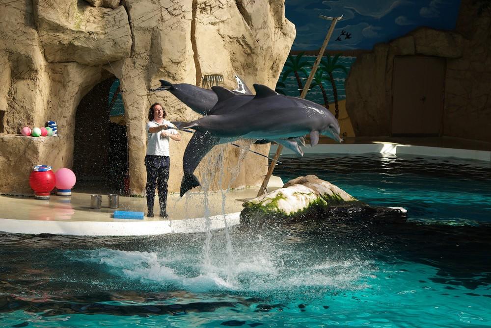 Fliegende Delphine