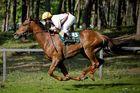fliegende Pferde ...