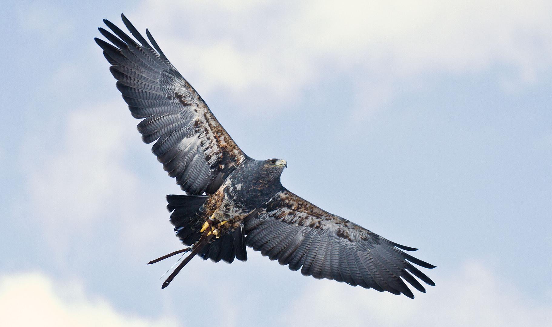 Fliegende Schönheit