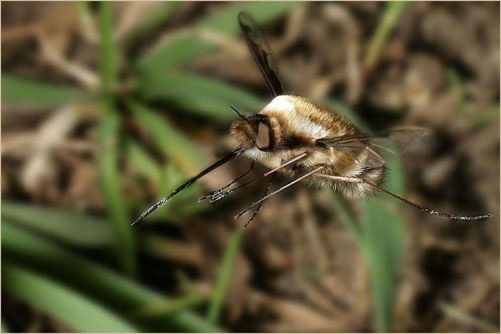 Fliegende Wollknäuel