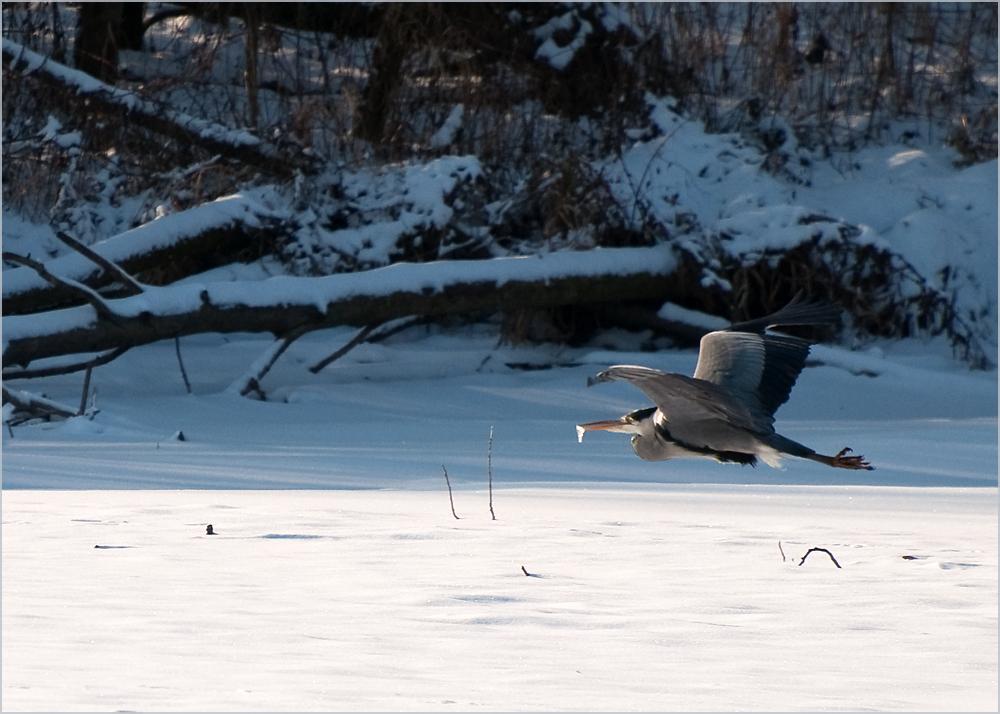 Fliegender Eiszapfen