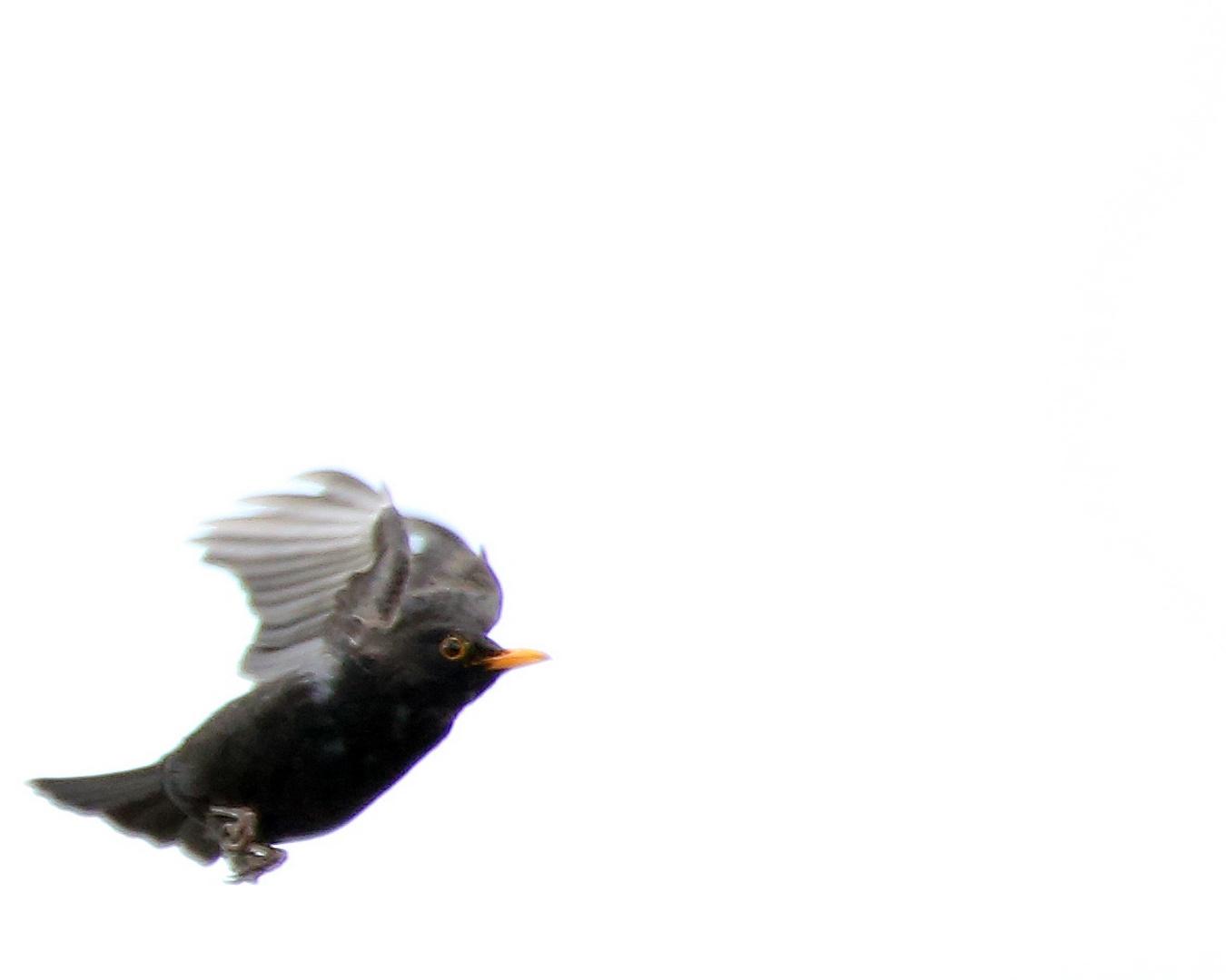 Fliegender Maulwurf ?