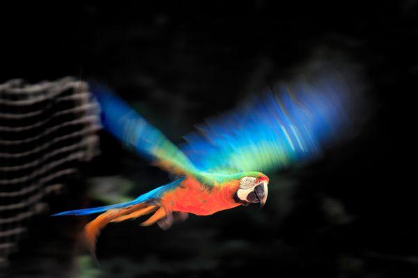 Fliegender Regenbogen