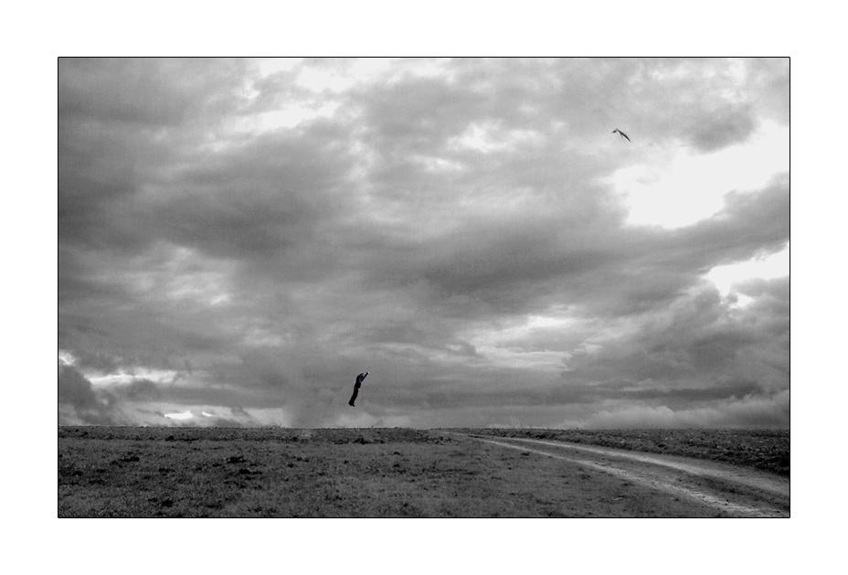 fliegender robert