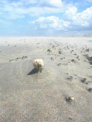 Fliegender Sand und freigelegte Muschel