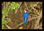 fliegender Saphir