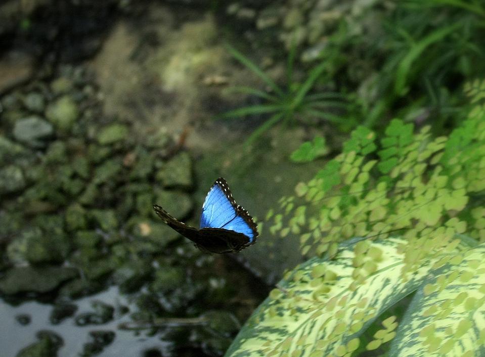 Fliegender Schmetterling