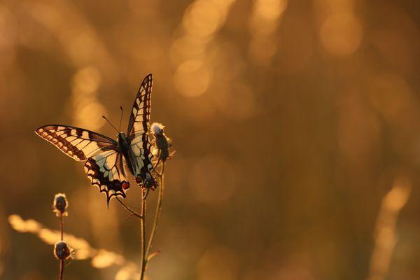 Fliegender Sonnenuntergang