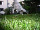 Fliegendes Hunde-Ufo