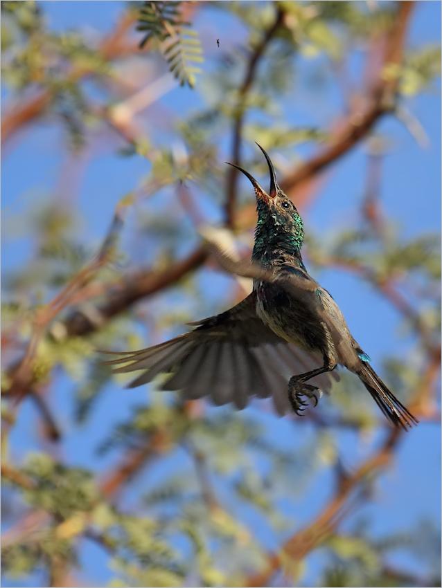 Fliegenfänger