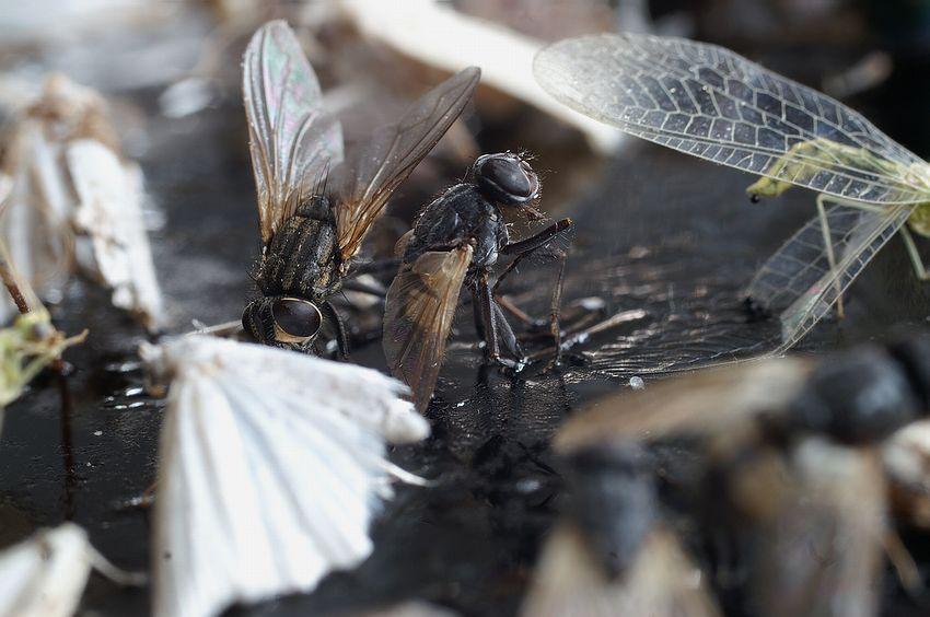 Fliegenfalle