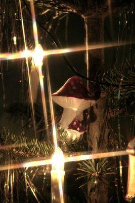 Fliegenpilz vs. Weihnachtsbaum