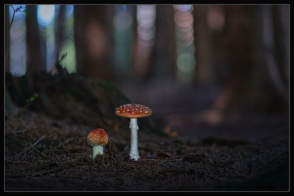Fliegenpilzwald