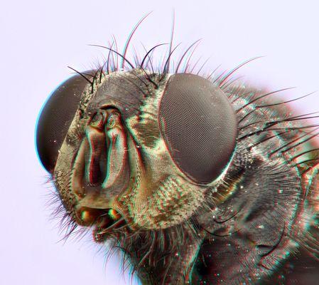 Fliegenportrait [3D]*
