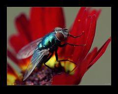 Fliegenpower 02