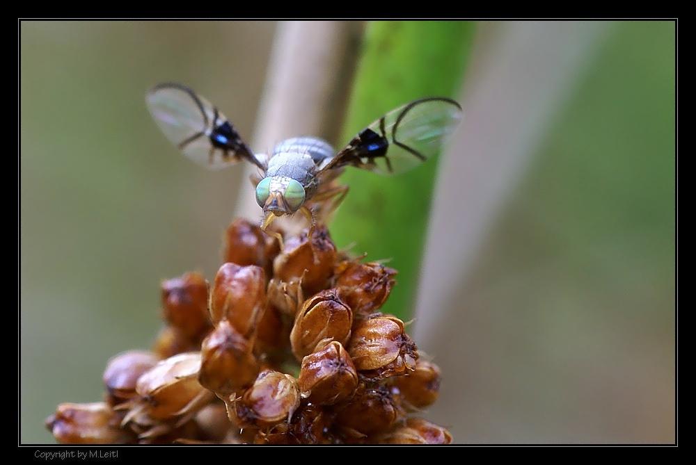 ''Fliegentag'' (2)