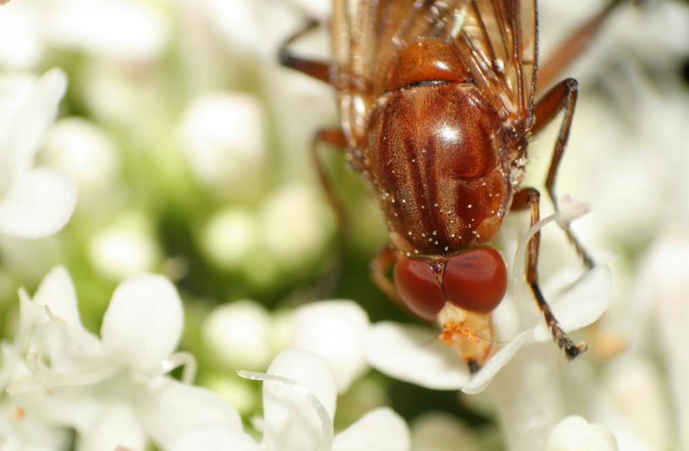 Fliegentier 2