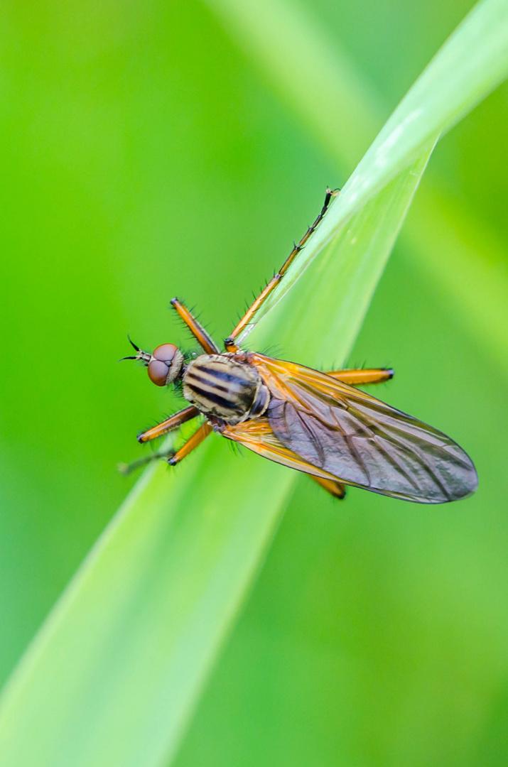 Flieger 2