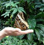 ...flieg...kleiner Schmetterling...flieg