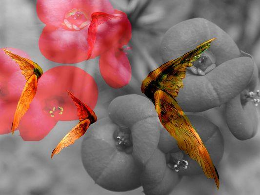 ...fliegt ihr wunderschönen Kussmünder fliegt...