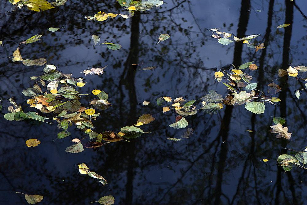 Flies im Herbst