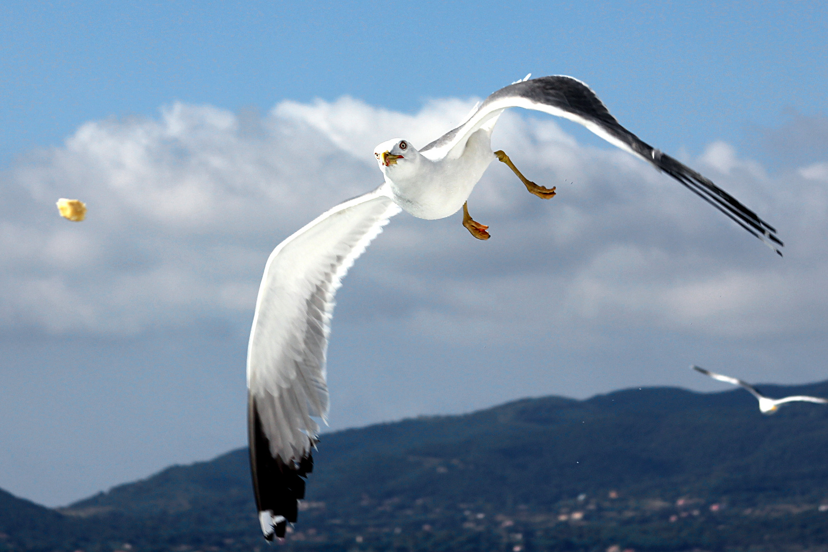flight maneuvers