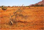 flinders ranges nationalpark