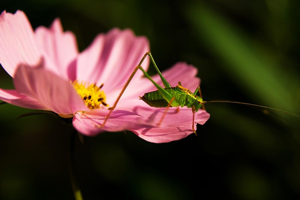 Flip von der Blumenwiese -1-