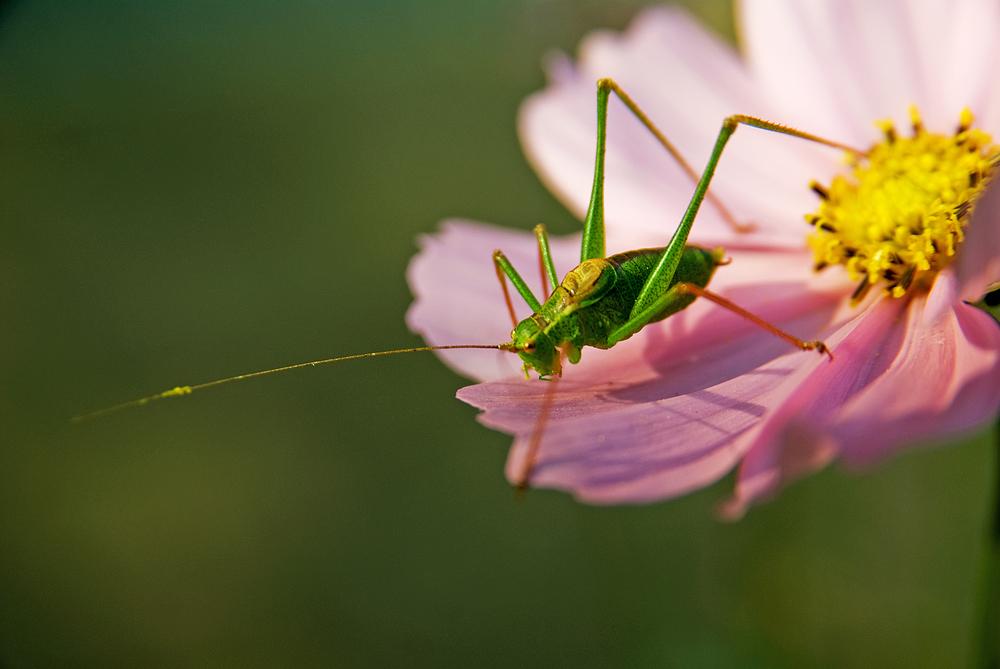 Flip von der Blumenwiese -2-