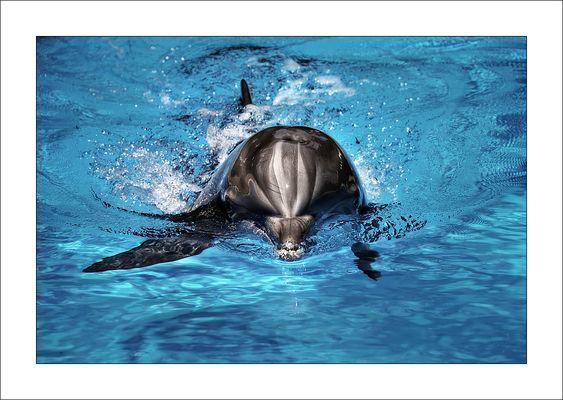 Flipper...
